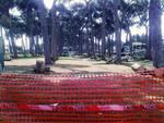 Potature nella Parco del Pineto