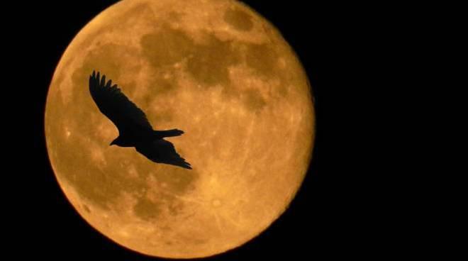 Stasera alle 21.09 la Luna sarà super.