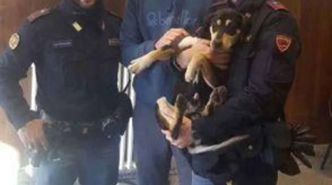 camilluccia cagnolino polizia