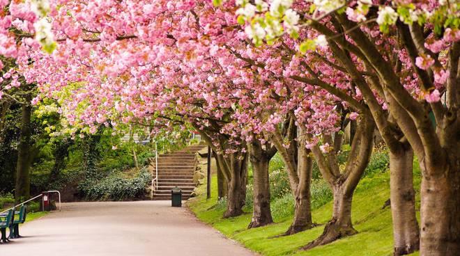 alberi-in-fiore,-strada,-scale-204938