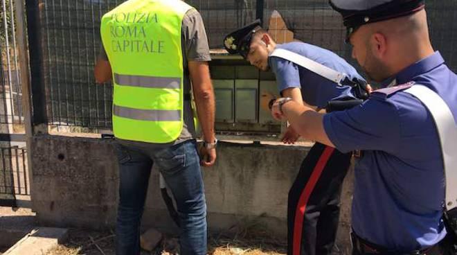 I Carabinieri del Gruppo Forestale di Roma e la Polizia Locale sequestrano l'area