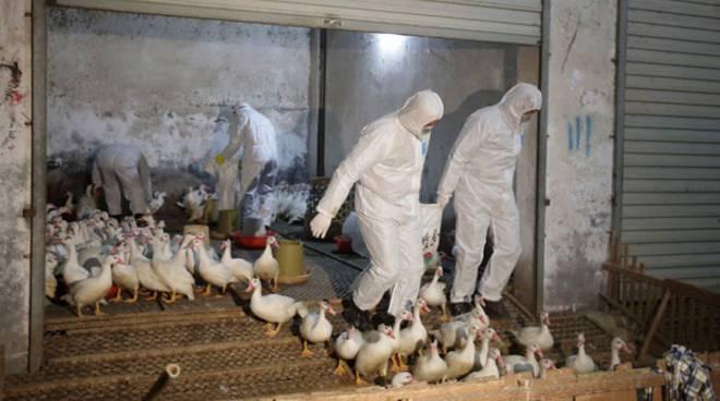 influenza-aviaria-h10n8
