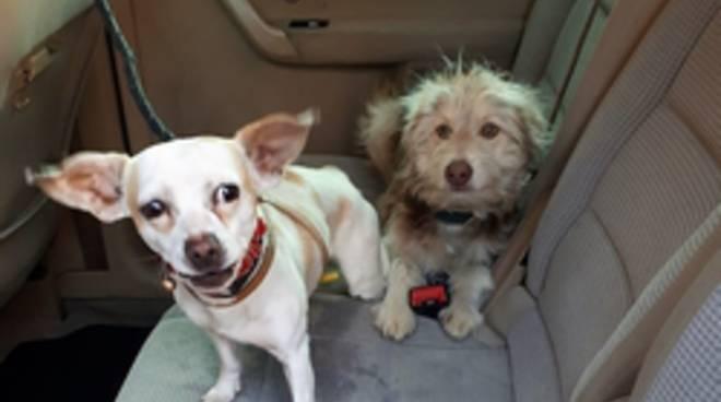 Cani salvati da Oipa