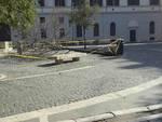 Municipio I Roma - albero