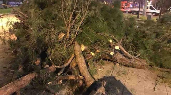 Roma - caduta alberi