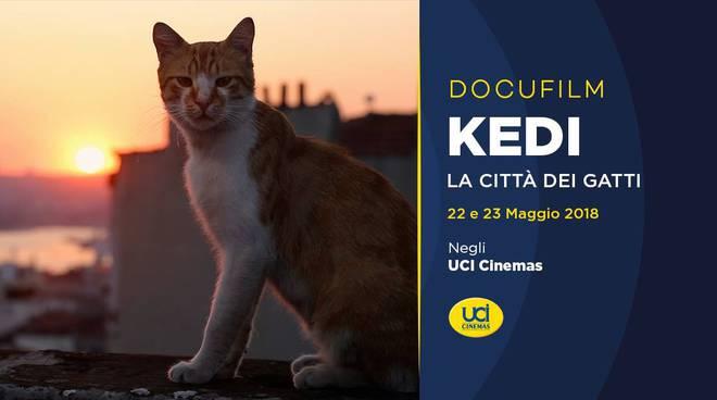 All'UCI Porta di Roma  arriva  Kedi – La Città dei Gatti