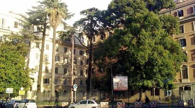 Roma: Cade un albero di 20 metri in parco pubblico