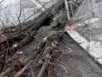 Trullo - caduta alberi