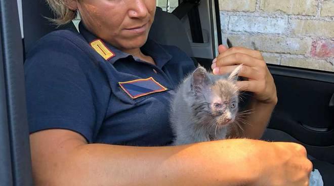 Gattini salvati da vigili