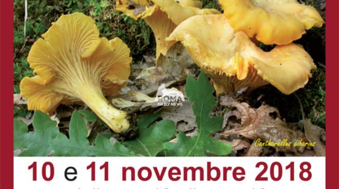 """XVII edizione della mostra """"I funghi e il bosco  10-11 novembre 2018"""