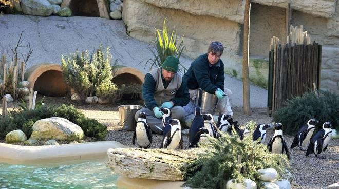 Bioparco-Pinguini del Capo