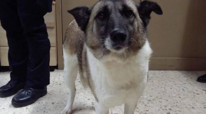 Cane salvato da Polizia Locale di Roma