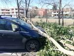 Crollo alberi in via Casal del Marmo