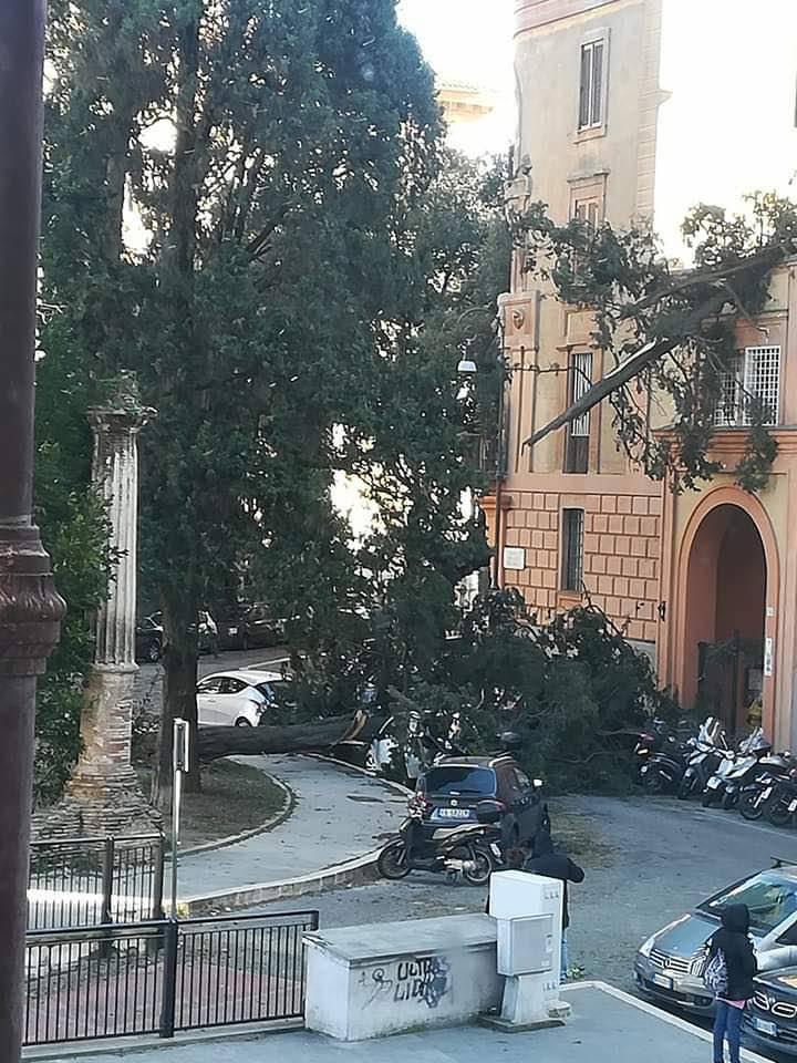 municipio ii - alberi caduti