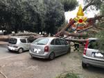 Roma - Crollo Pino Viale Mazzini