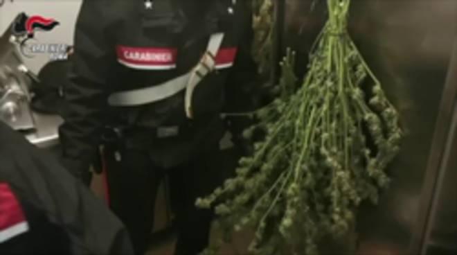 marijuana tivoli