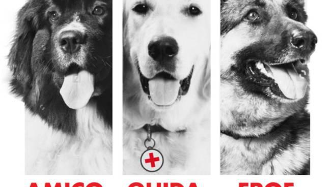 una vita da cani