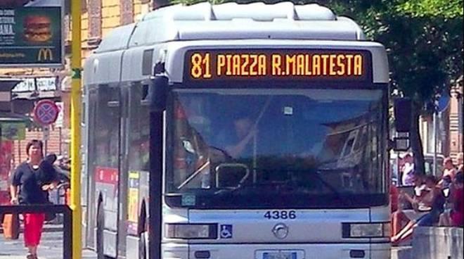 autobus 81