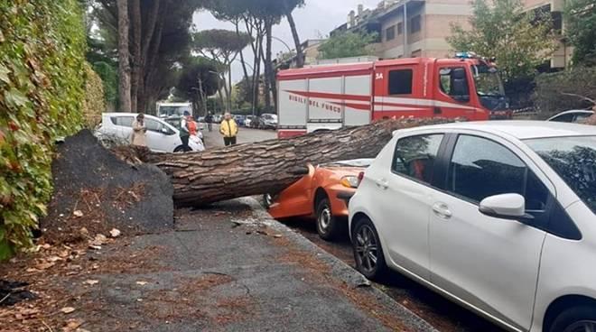 alberi caduti mostacciano