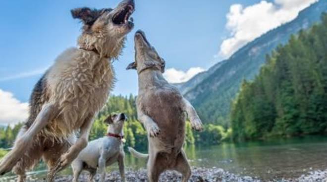 Patentino cani