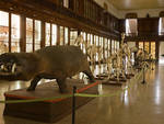 museo zoologia