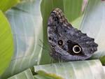La Casa delle Farfalle porta la primavera a Roma