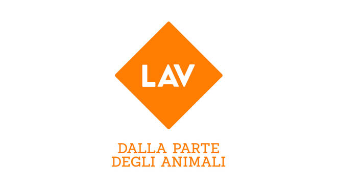 lav animali