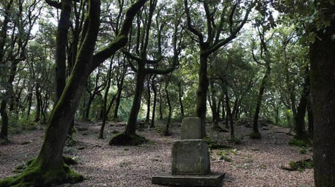 bosco sacro