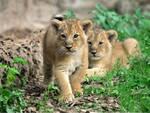 leoni bioparco
