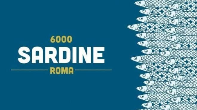 6000 sardine