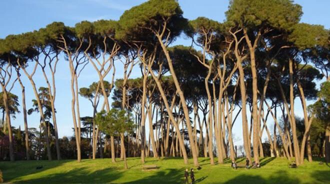 ROMA. ROSATI (EUR SPA): EMERGENZA PINI È SFIDA, DA CITTÀ PARTA PROTOCOLLO